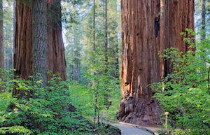 Discount hotels and attractions in Sutter Creek, California
