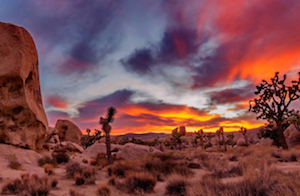 Discount hotels and attractions in Twentynine Palms, California