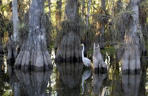 Cheap hotels in Hialeah Gardens, Florida