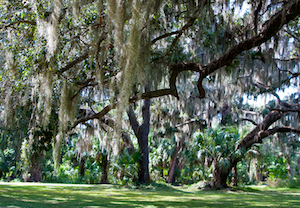 Discount hotels and attractions in Ocklawaha, Florida