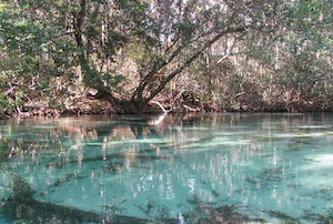 Hotel deals in Weeki Wachee, Florida