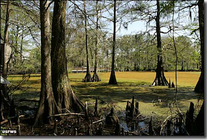 Discount hotels and attractions in Jennings, Louisiana