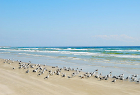 Cheap hotels in South Padre Island, Texas