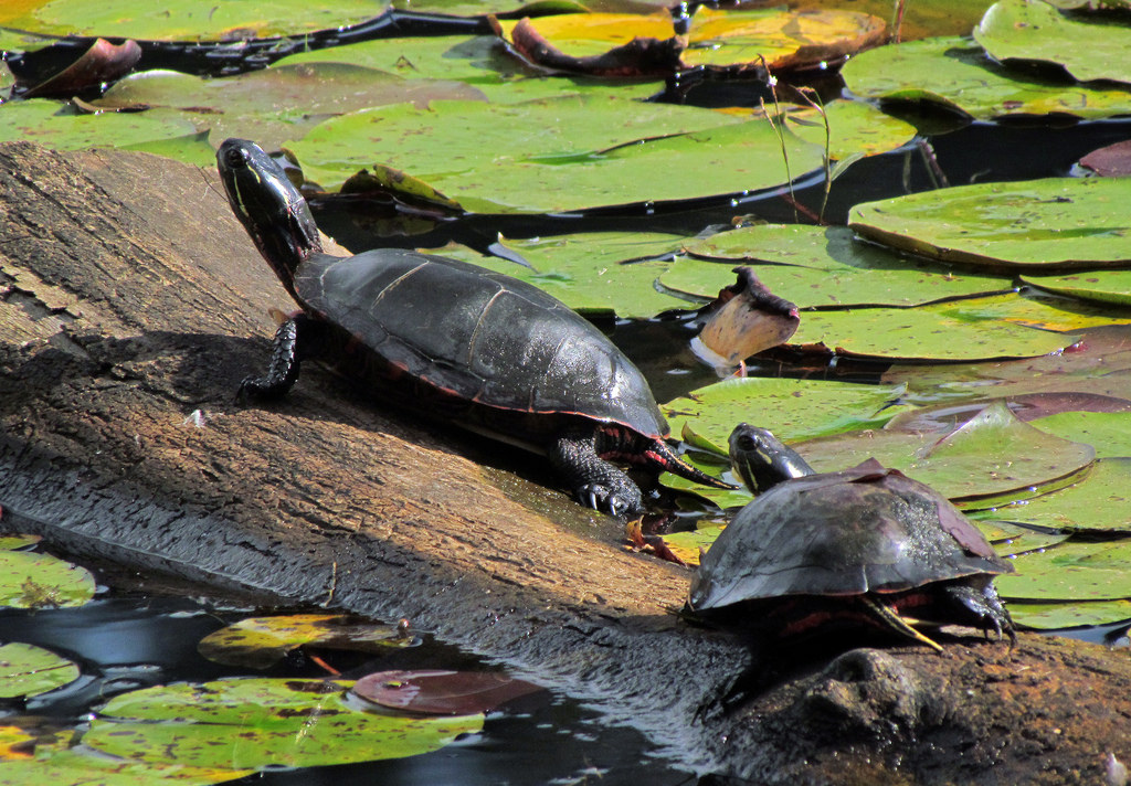 turtles at the wildlife preserve