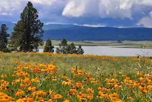 Discount hotels and attractions in Springerville, Arizona