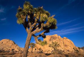 Cheap hotels in Yucca, Arizona