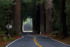 Discount hotels and attractions in Benbow, California