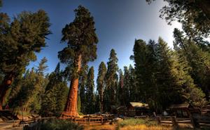 Cheap hotels in Sequoia, California