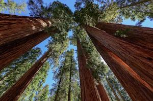 Hotel deals in Sequoia, California