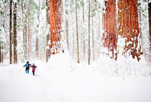 Discount hotels and attractions in Sequoia, California