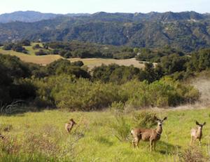 Hotel deals in Woodland Hills, California