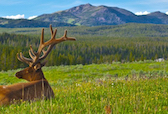 Hotel deals in Dillon, Montana